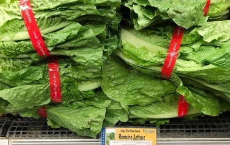 Lettuce Know: Responses to the E Coli Outbreak