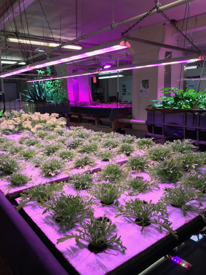 Hydroponic gardens at Plant Chicago